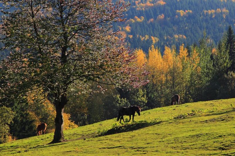 Vydejte se za krásami podzimních Beskyd
