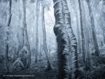 Mrazivý snímek z lesa na Pustevnách se dostal až do National Geographic