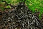 Beskydský prales Mionší budou sledovat vědci