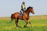 Stáj Newport ranch v Dolních Domaslovicích